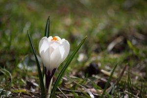 Single White Flower, by blacky_mo